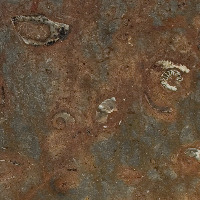 Gran Fossil - Brown | Arizona Countertops