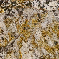 Napoleon - Cream, Gold, Yellow | Arizona Countertops